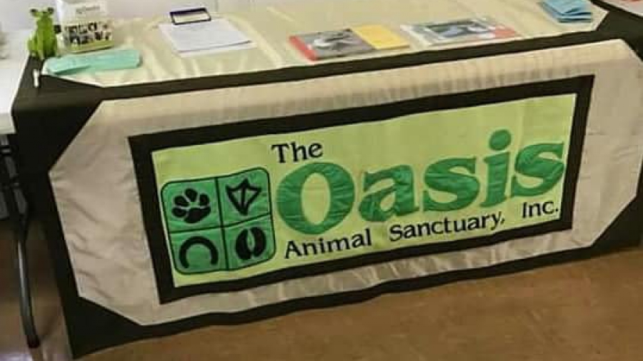 oasis 7