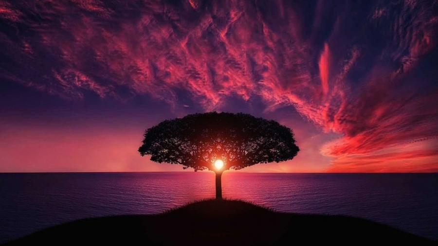 tree-736885_960_720