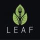 z-leaf-300x240