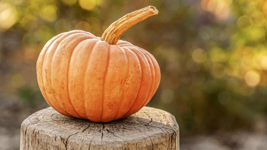 pumpkin-4454745_1280 (1)