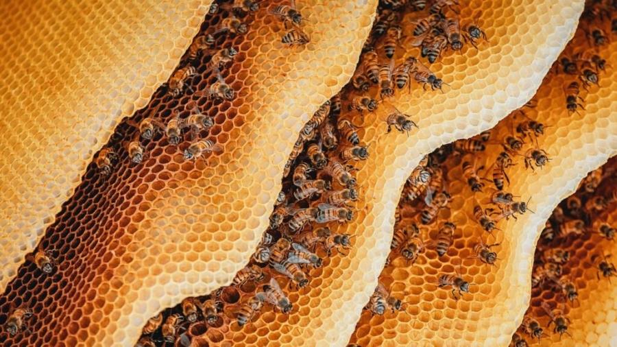 is-honey-vegan-1024x576